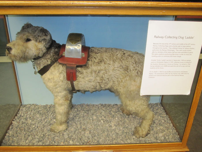 Railway Collecting Dog