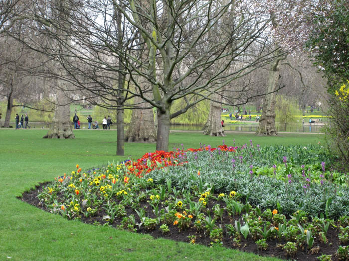 St James's Park at the beginng of blooming season