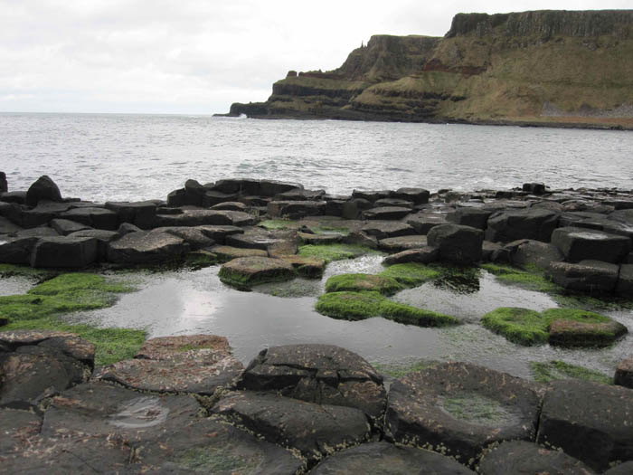 Algae growing on the polygonal rocks of Giant's Causeway