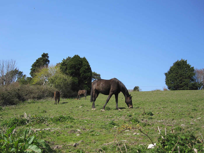 Horse pasture in Kinsale
