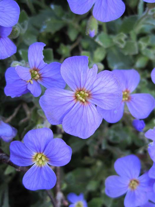 """""""Neon"""" violet flowers in Kinsale"""