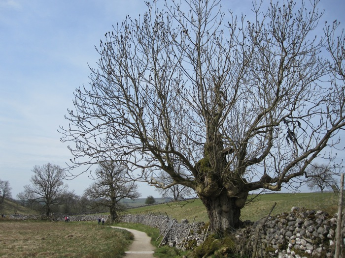 Gnarly trees, stone walls, and winding paths