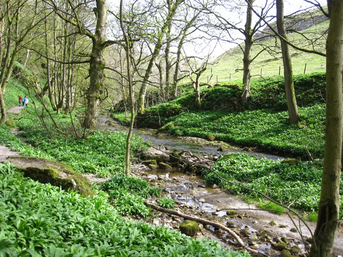 A glen of sorts in the Yorkshire Dales